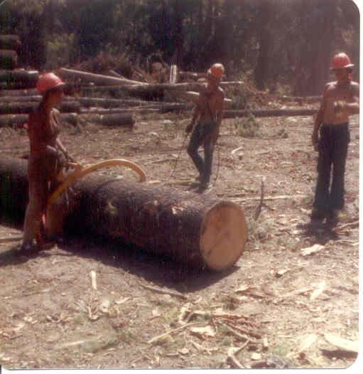 logging5